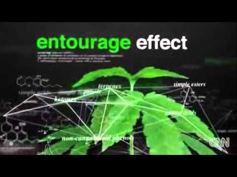 definition of entourage effect