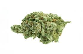 Harlequin CBD hemp strain for the experience