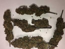 Purple Boax hemp strain and all the terpenes