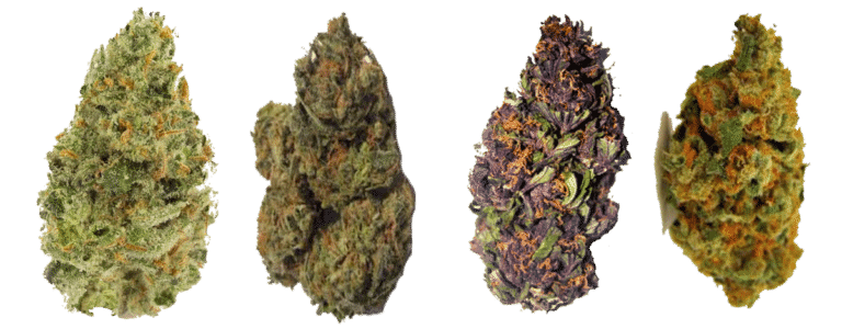 CBD hemp strains