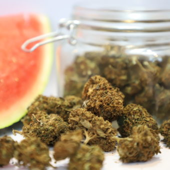 watermelon haze