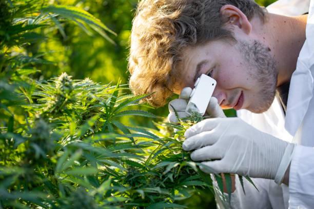 which state grows hemp best