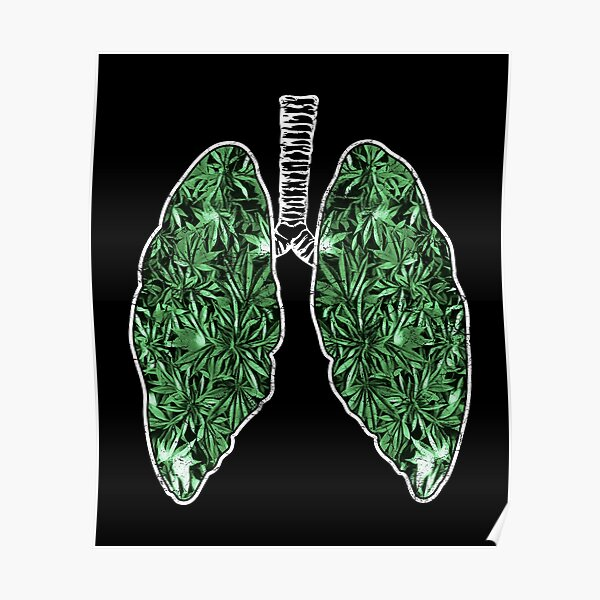 CBD bud and lung inflammation