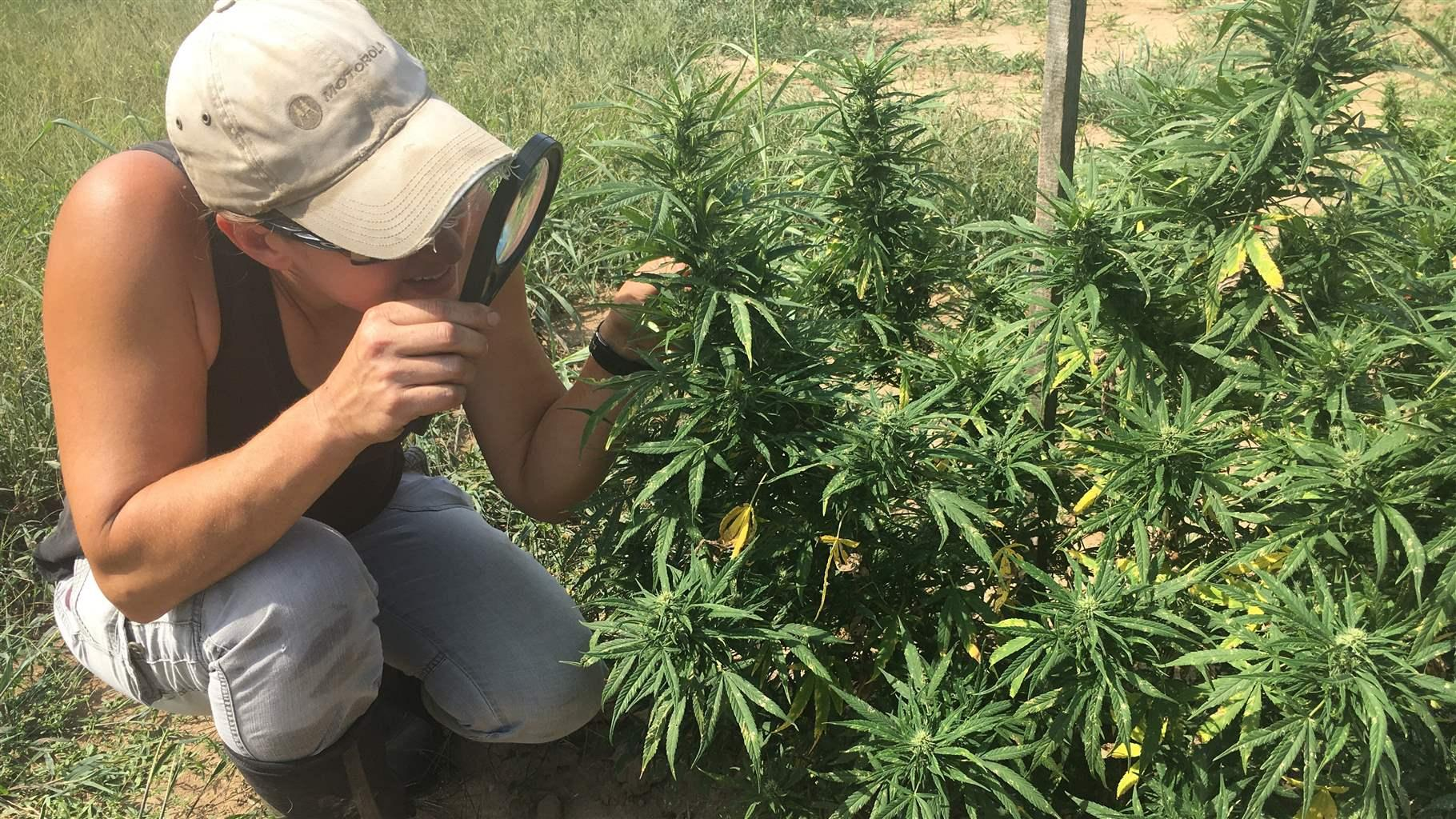 the hemp farmer