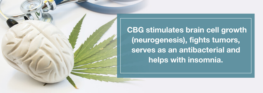 Hemp CBG and the endocannabinoid system