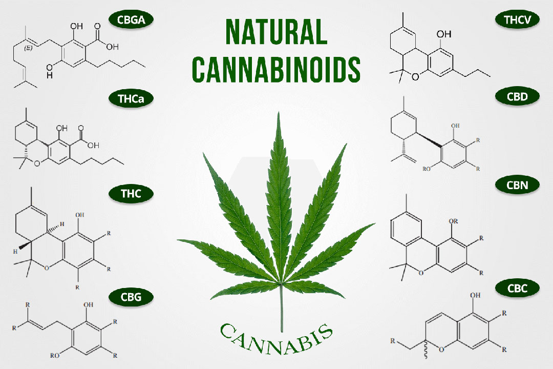 about CBC and CBN of the Hemp Flower