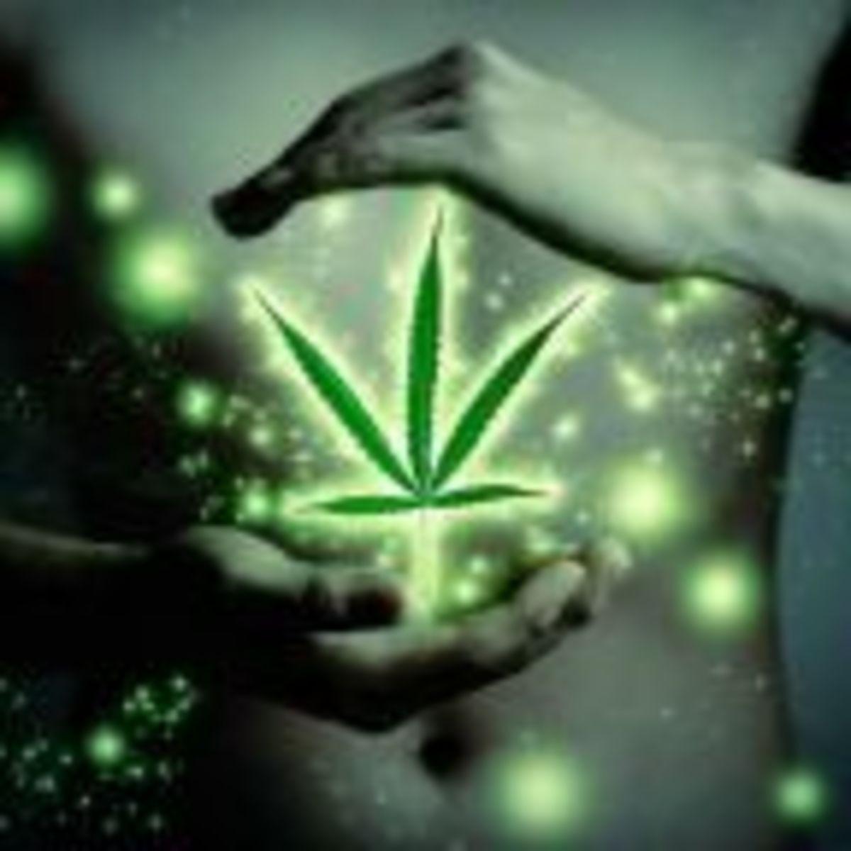 Cannabis family plant physiology