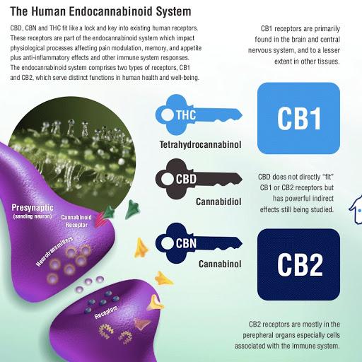 CB receptors and CBD action plan
