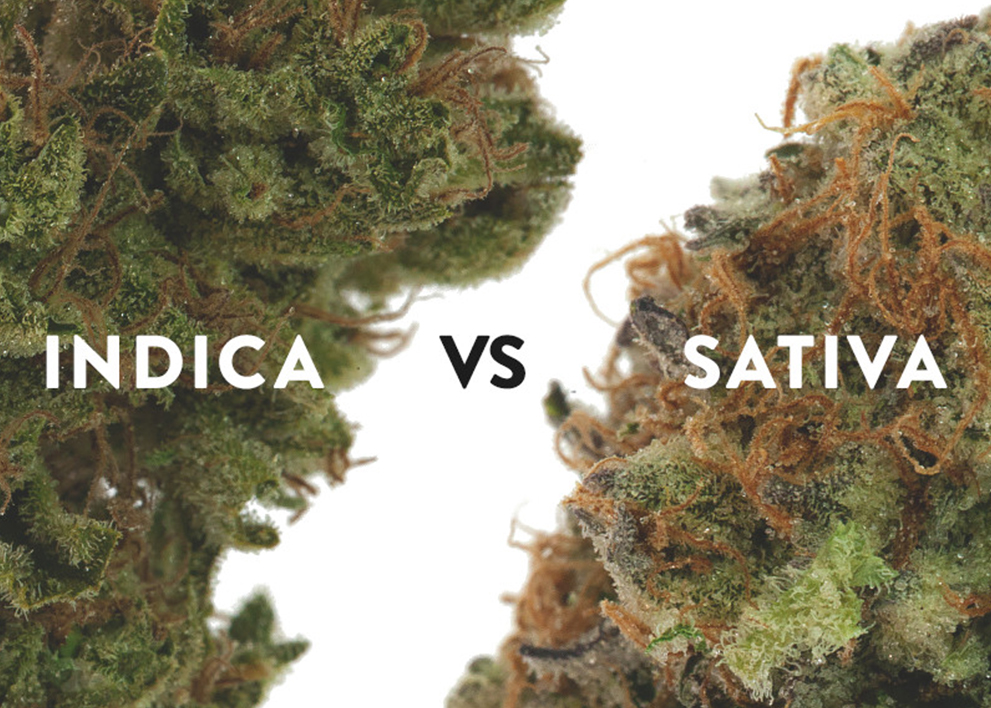 real difference between cannabis subspeciesabis