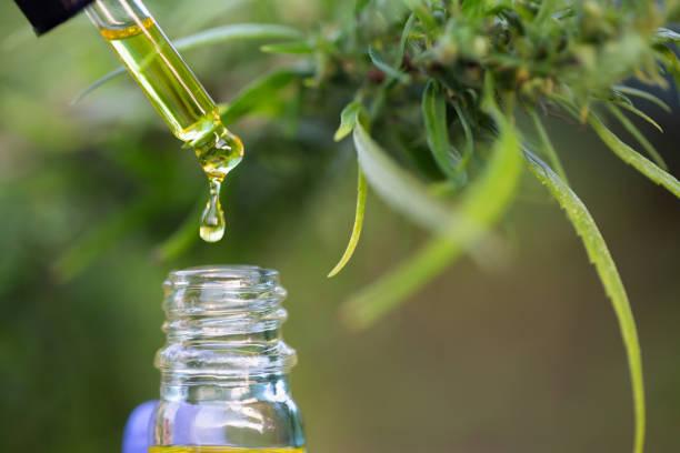 hemp extract or CBD oil extract