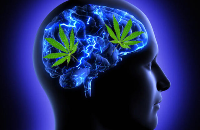 Hemp Flower is all about the mind